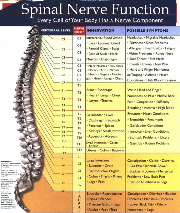 Nerve chart brandt chiropractic